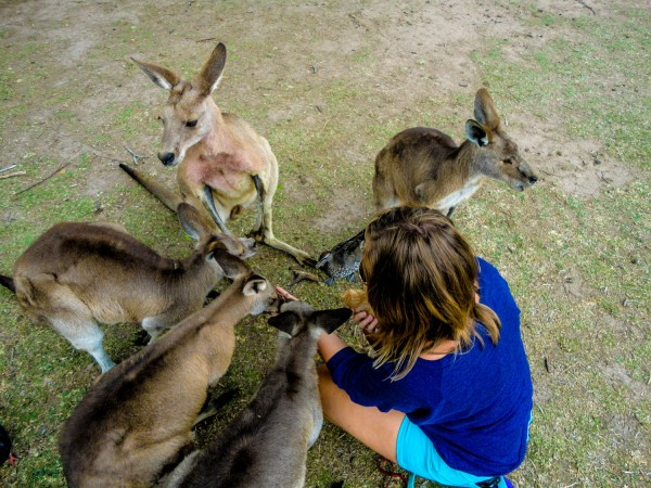 Hanging out with Kangaroos - Brisbane, Australia
